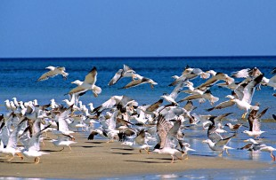 Oman_Wildlife_Animals_BirdsOnBeach_5
