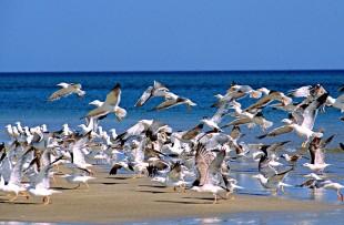 Oman_Wildlife_Animals_BirdsOnBeach_5